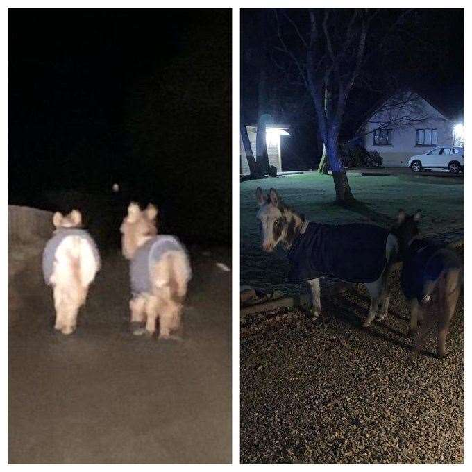 The pair were found wandering on a rural road before being returned to thier home.