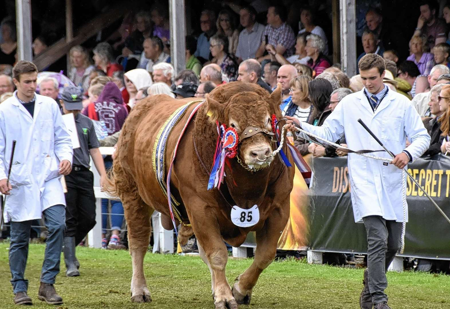 Countdown is on for Turriff Show