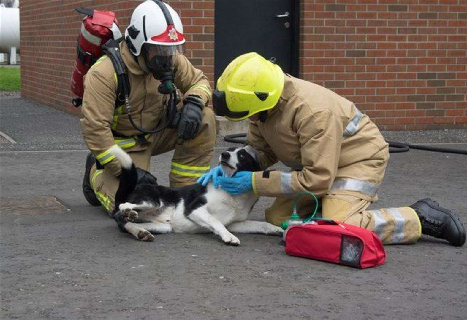 Campaign to ensure fire crews have animal lifesaving equipment