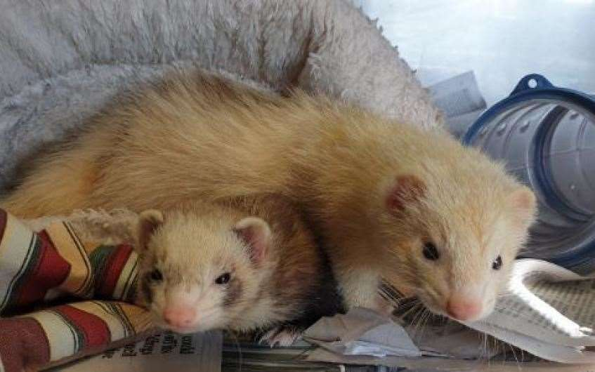 Can you give Autumn and Amber a new home?