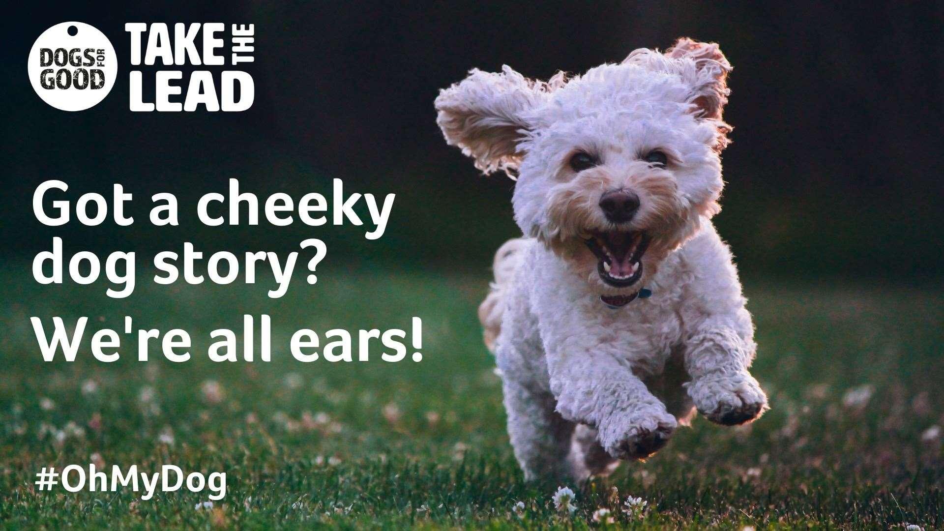 Avez-vous l'histoire de chien la plus effrontée?
